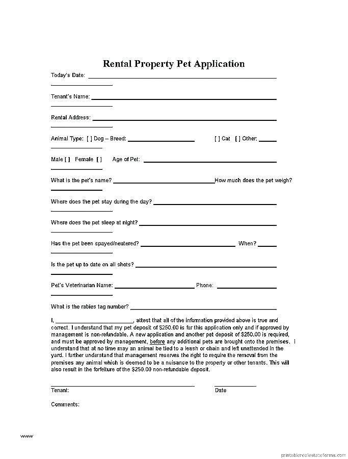 Rent Contracts Examples